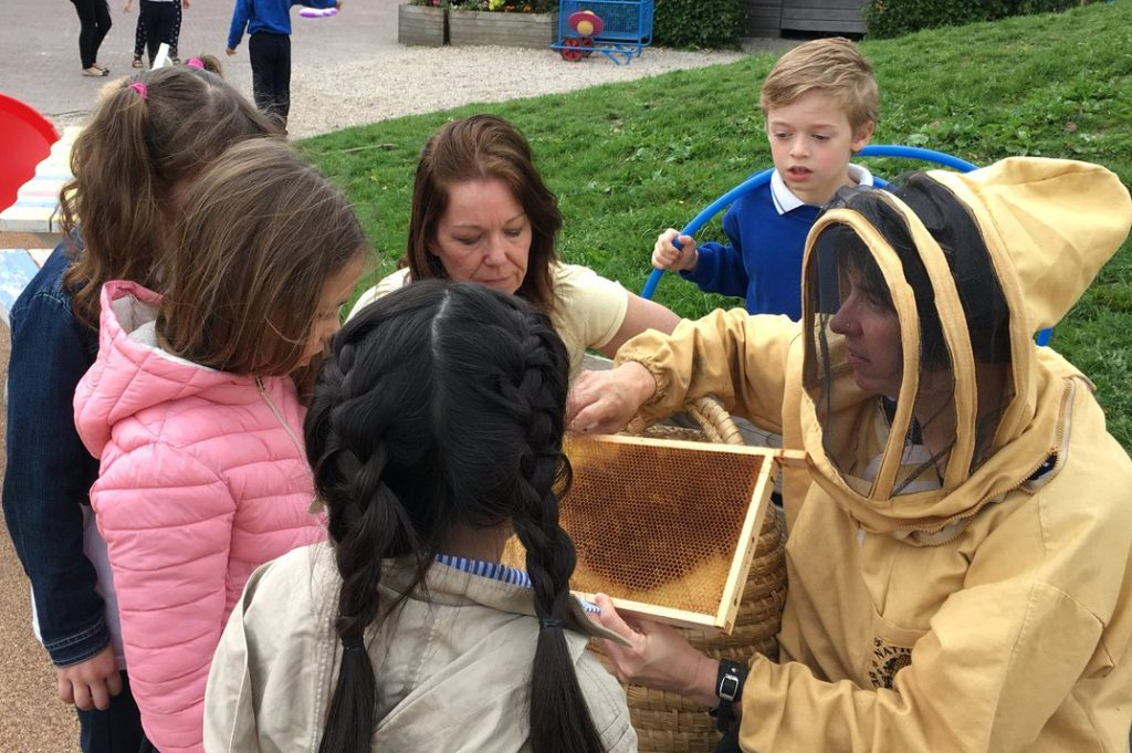 The Buzz about Bees at the BSN