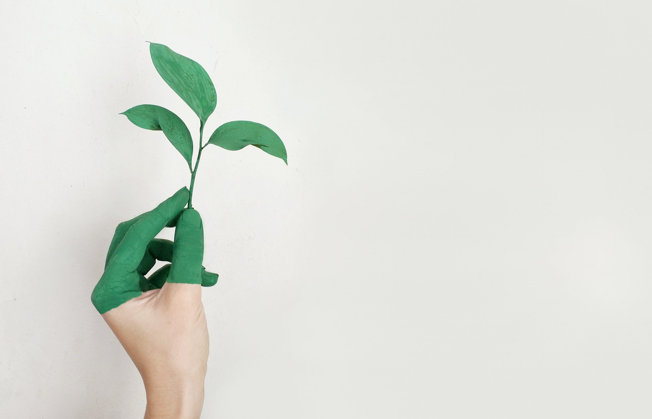 The Eco Team : Globally Sustainable